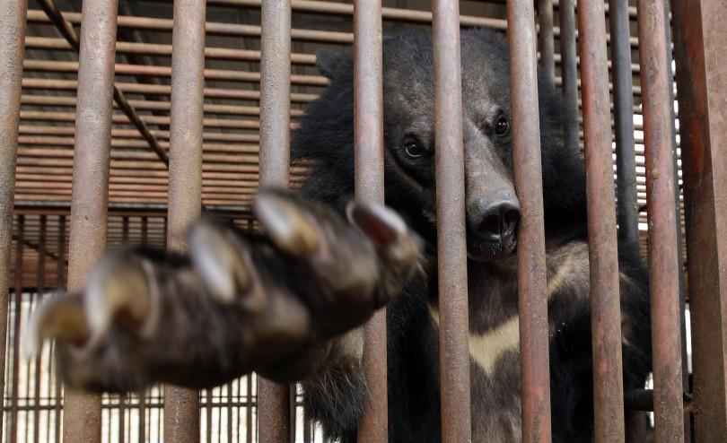 Медвежий концлагерь