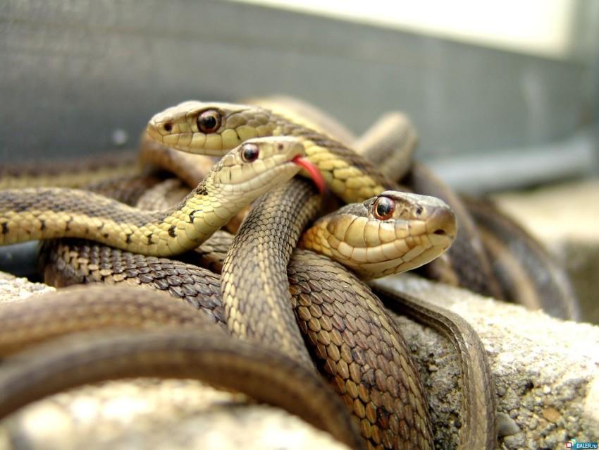 Змеи в здание