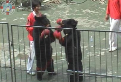 Медведи-боксеры в Циндао2
